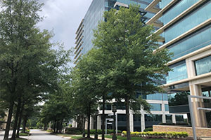 Commercial building tree maintenance and services